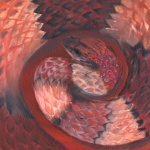 South: Red Corn Snake -- Coiled and poised to shed its skin, the red corn snake prepares for its new growth.