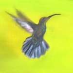 North: Black-chinned Hummingbird -- Stillness in motion, black-chinned hummingbird enjoys drinking in the sweet nectar along the journey.
